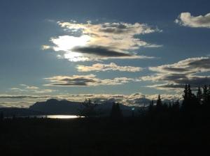 Skogshorn i solnedgang